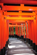 Walking through the torii.