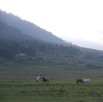 Horses in the Phobjikha Valley