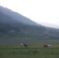 Horses in the Phobjikha Valley